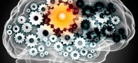Notre cerveau et les découvertes de la neuropédagogie